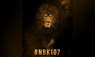 NBK and Gopichand Malineni film